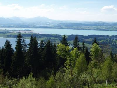 Mit dem Mountainbike über das Mühlberger Älpele zur urigen Buchenberg Alm
