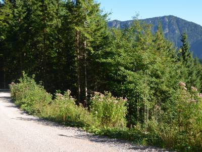Die 13,3 Kilometer lange Mountainbike-Tour von Füssen zur Vilser Alm